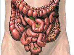 مقدمة عن الأمعاء
